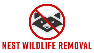 Nest Washington Wildlife Removal Services